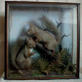 Red Squirrels (Hope).jpg