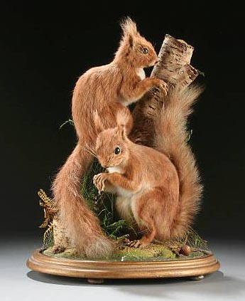 Red Squirrels 666 (Hutchings).jpg