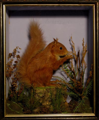 RedSquirrelLowne.jpg