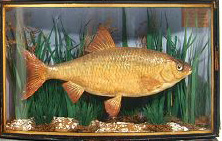 andy'sfish2.jpg