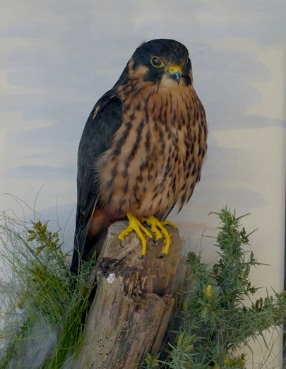 articles on birds of prey