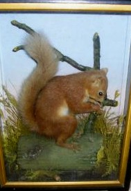 hutchredsquirrel10.jpg