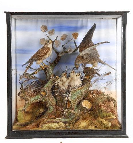 Taxidermy Prices