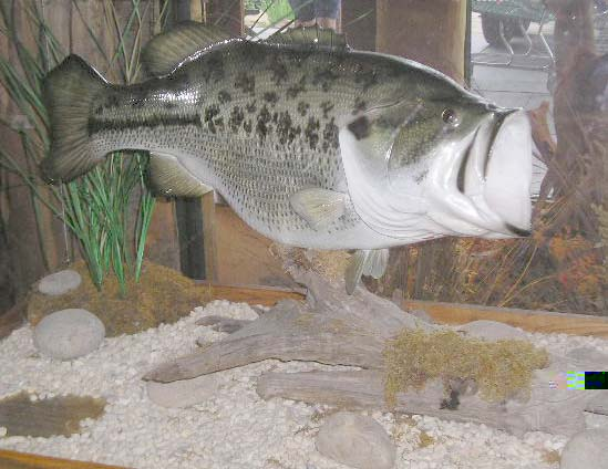 largemouth.jpg