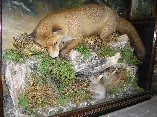 Taxidermy Collecting
