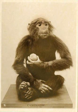 postcardchimp.jpg
