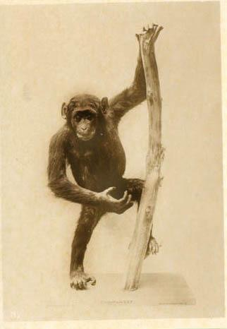 postcardchimp1.jpg