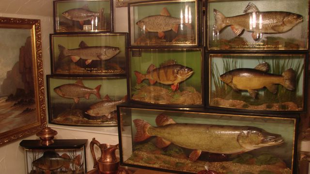 Man Cave Cannock : Taxidermy from wales