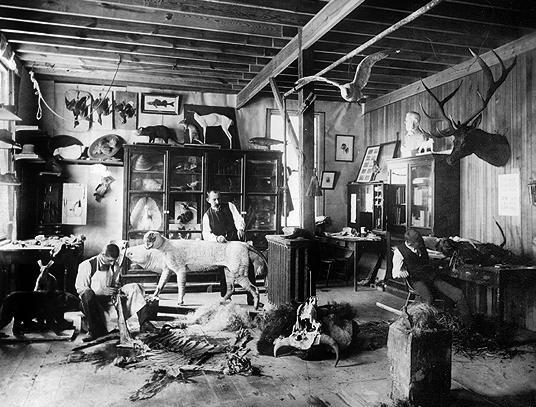 taxidermyworkshop.JPG