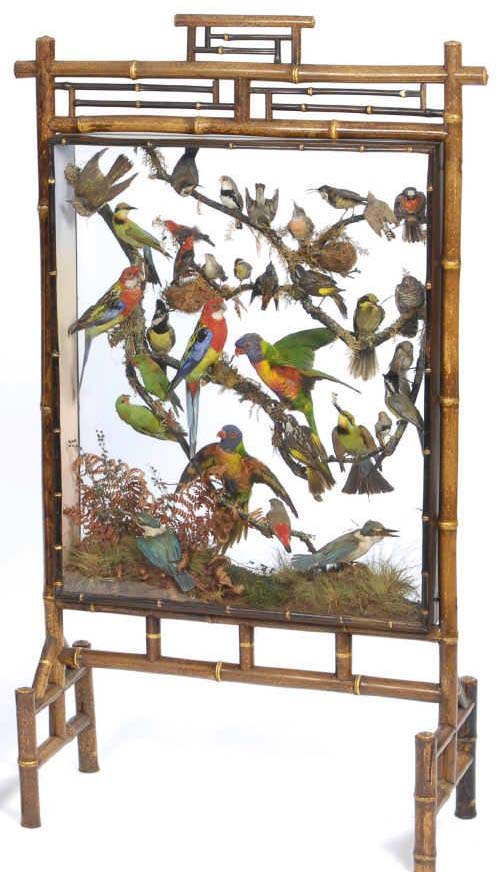 tropical-birds-firescreen-by-rowland-ward-taxidermy-image.jpg