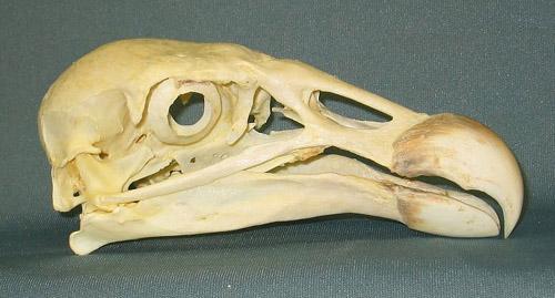 Weird Animals Skulls 9